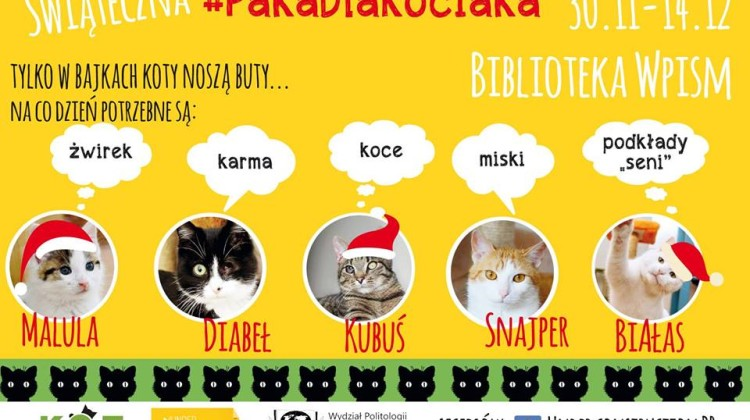 koty wpism