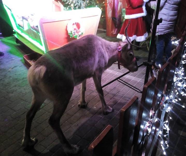Renifer przy jednym z lokali gastronomicznych znajdował sfotografowany 1 grudnia [fot. nadesłane]
