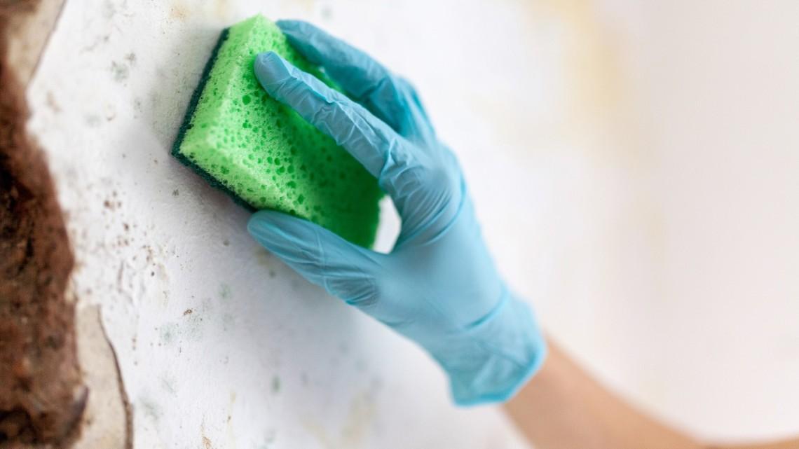 Do oczyszczania mieszkania należy przystąpić z odpowiednim sprzętem i wiedzą np. na temat kolejności wykonywania odpowiednich działań. [fot. materiały partnera]