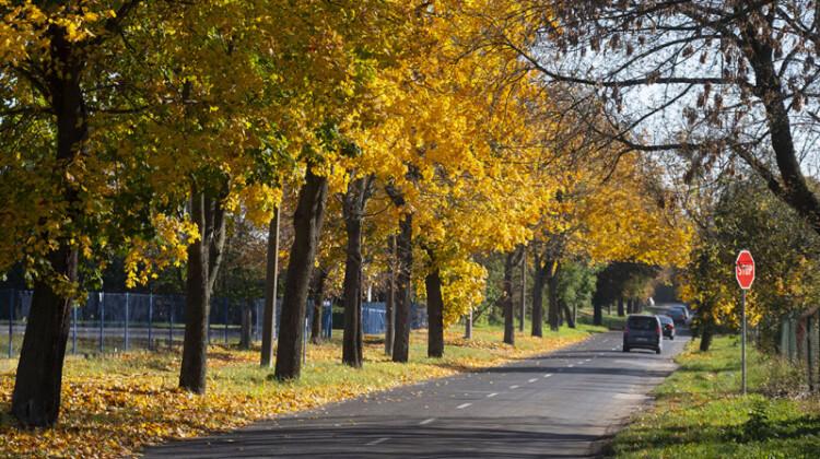 Na toruńskich ulicach zrobiło się złoto [fot. www.torun.pl]
